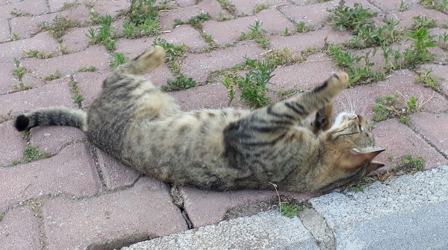 Как понять, какие игрушки нравятся кошкам