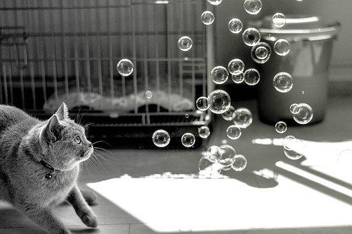 Кот смотрит на мыльные пузыри для кошки