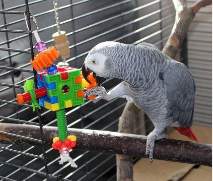 Игрушка для попугая Игрушки для птиц