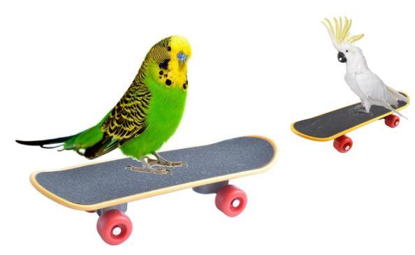 Забавные игрушки для птиц: скейтборд