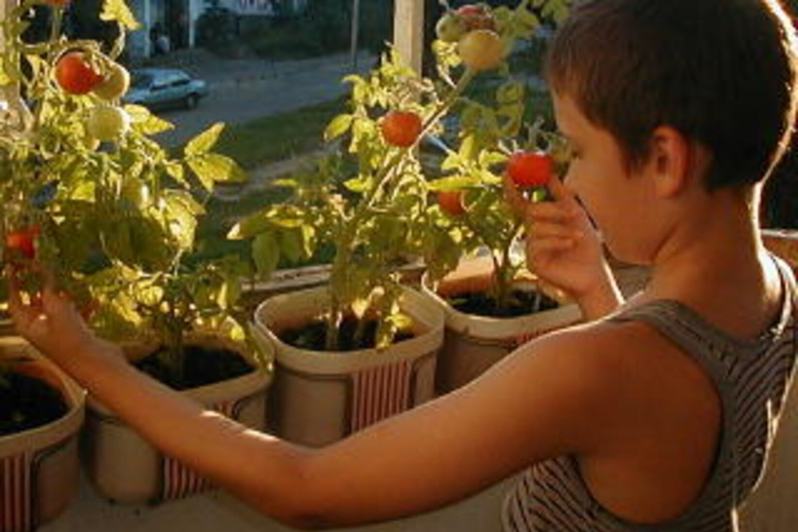 приучить ребенка к труду садоводство на балконе